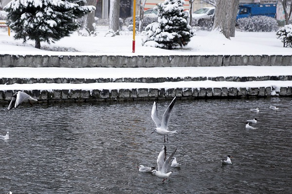 تصاویر/بارش برف در اردبیل